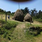 Vista tipicas varas de yerba